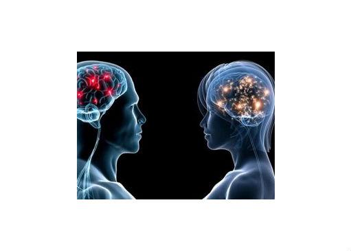 Les secrets du fonctionnement du cerveau…